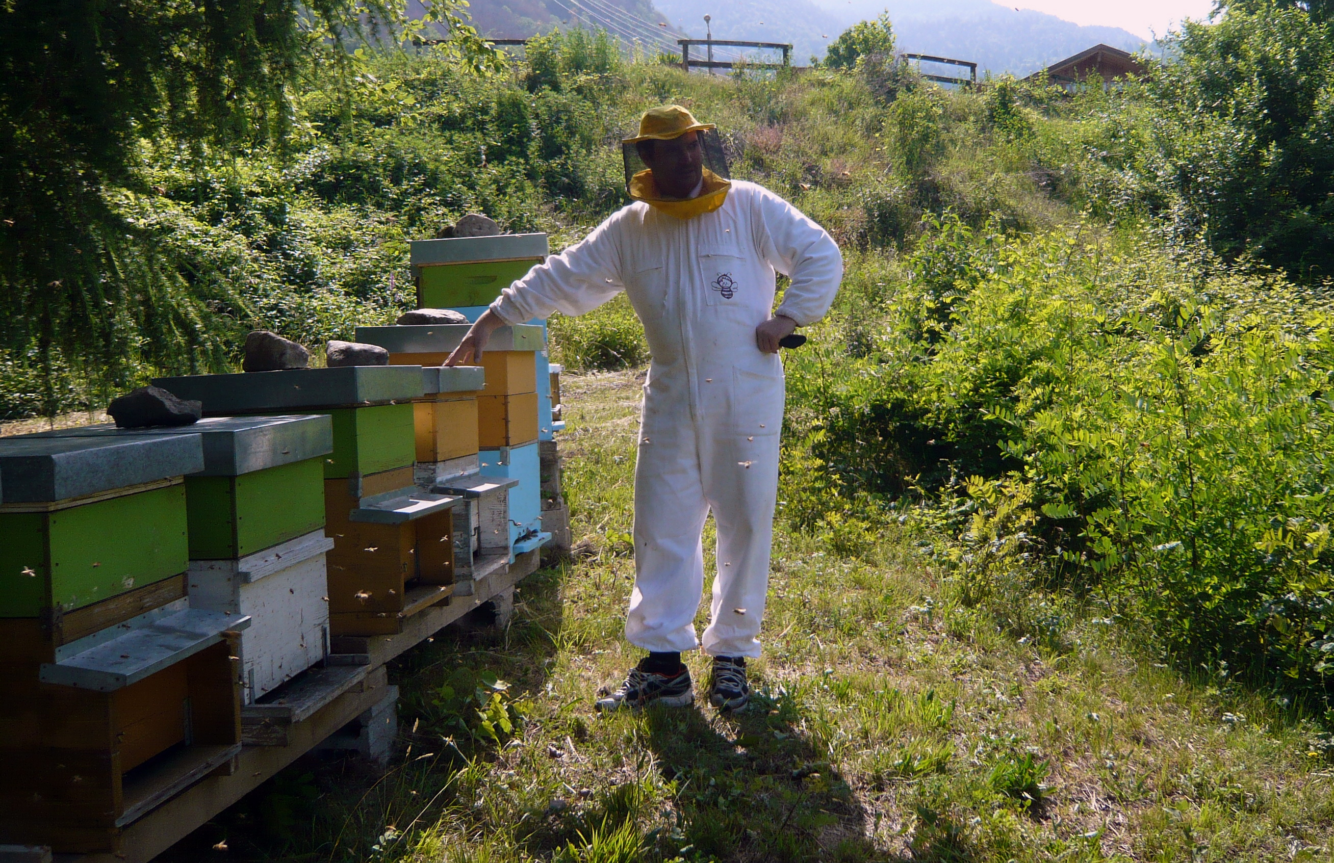 apicoltore arnie miele ronchello