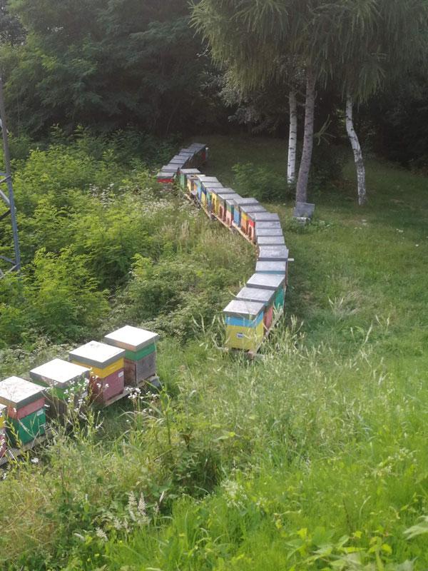 ronchello zone produzione miele artigianale